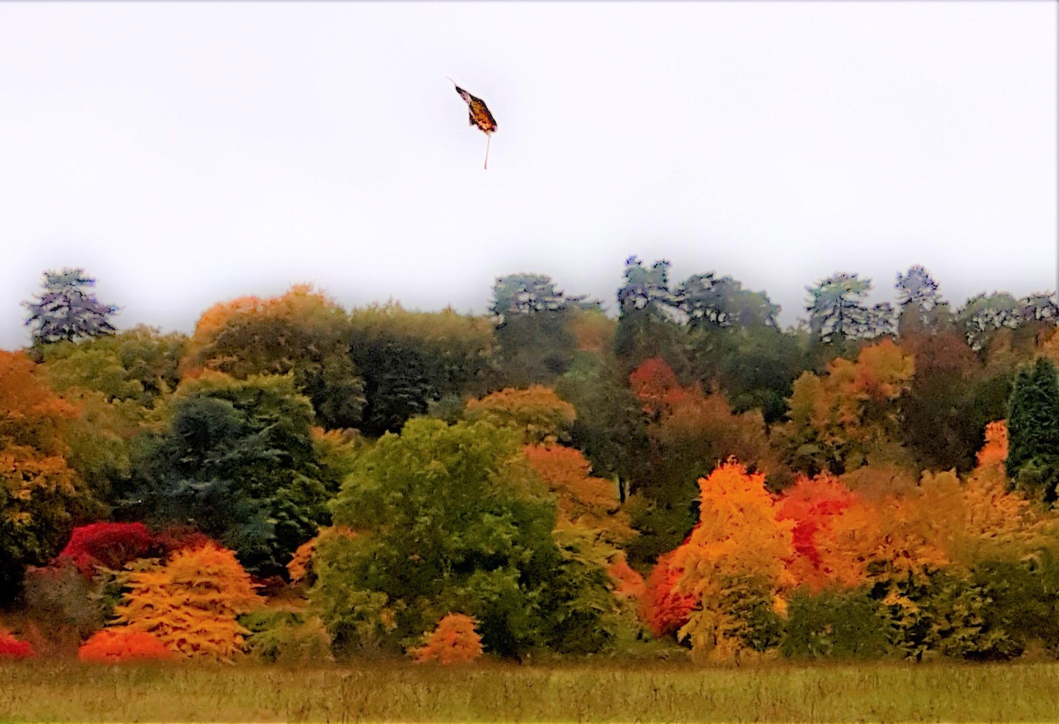 Autumnal Arboretum