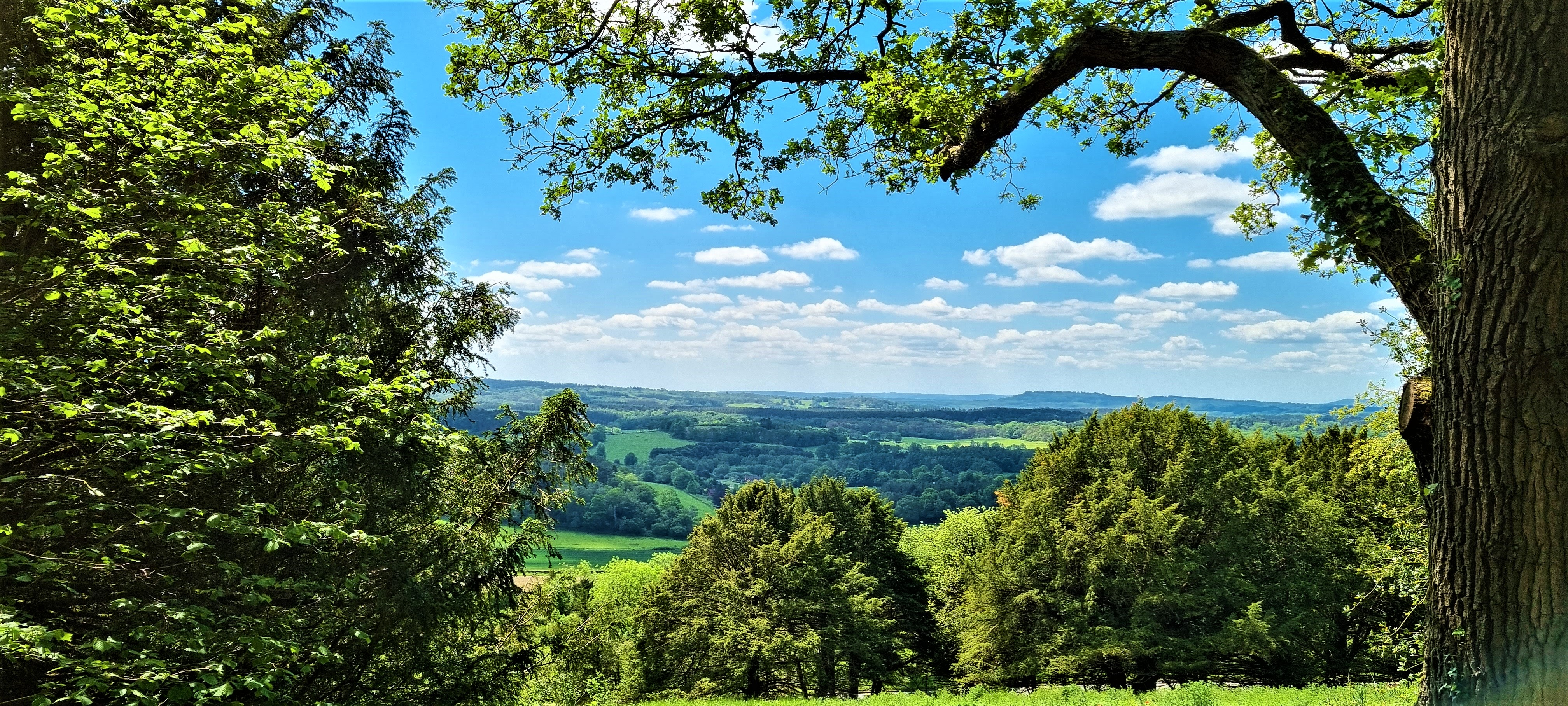 North Downs Way: Shalford to Westhumble